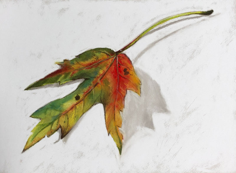 Drawing of an Autumn Leaf with PanPastels and Colored Pencils