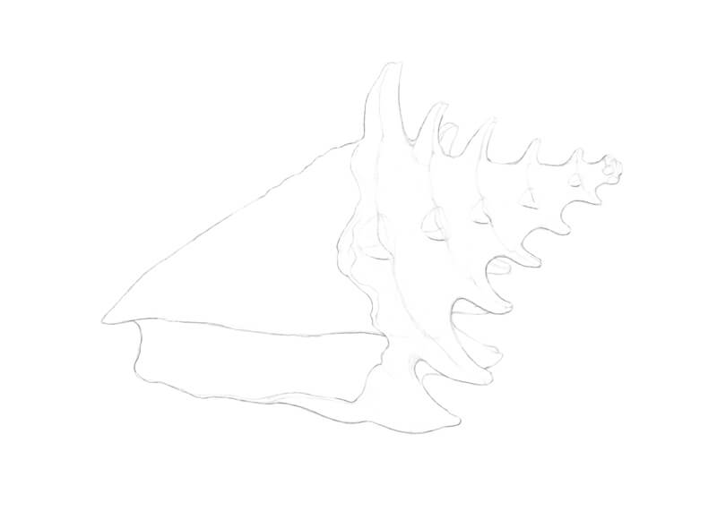 Preliminary drawing of a seashell