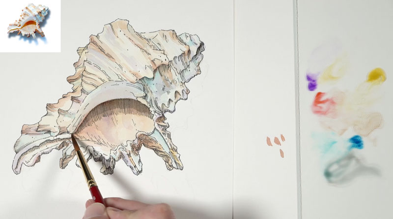 Adding cool colors to the shadows on the seashell