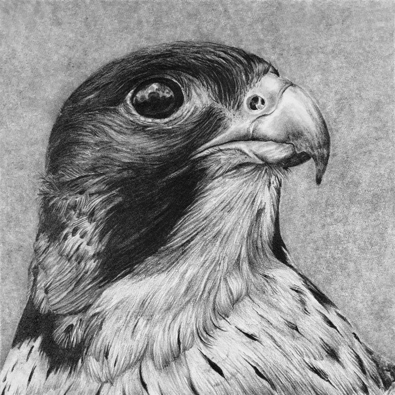 Drawing created with Blackwing Pencils