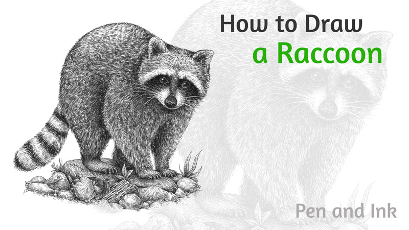 How to draw a Raccoon with pen and ink