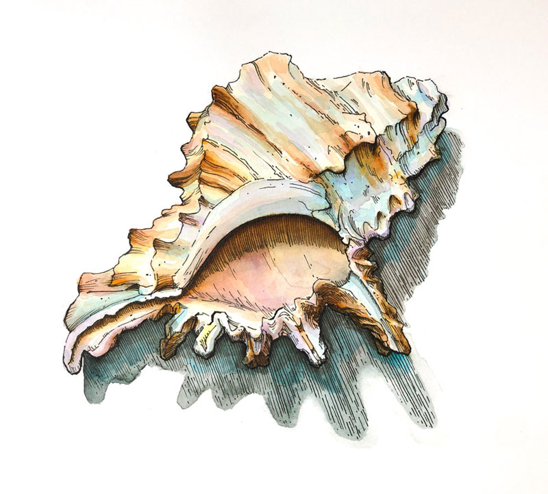 Seashell Drawing with Watercolor Markers