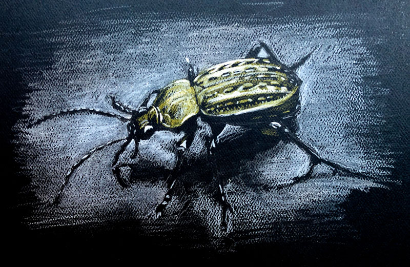 Colored pencil drawing of a bug on black paper