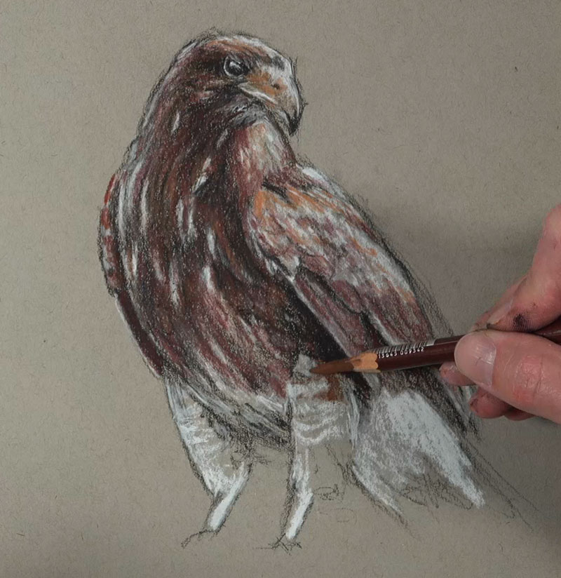 Adding sepia tones to the drawing with pastel pencils