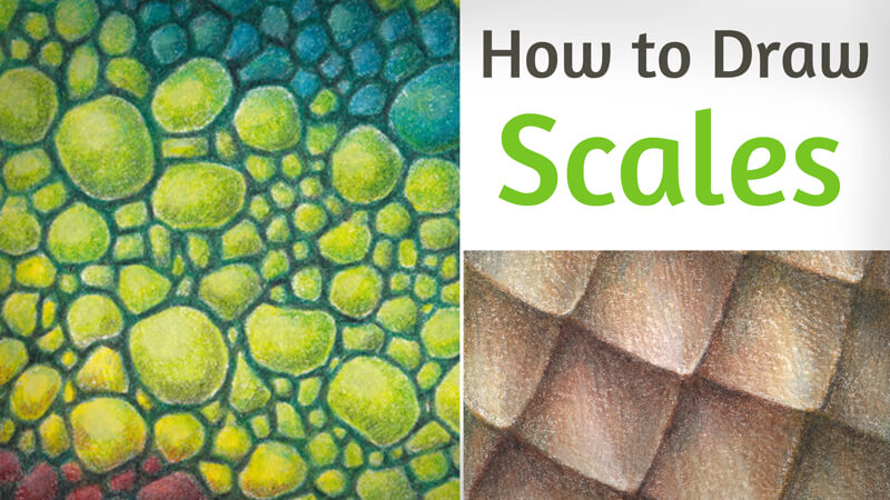 How to Draw Animal Scales