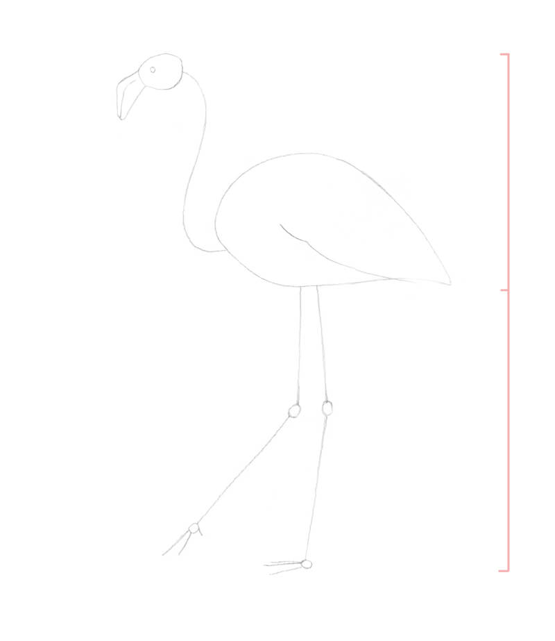 Construction shapes of the flamingo