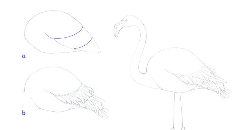 Drawing flamingo feathers
