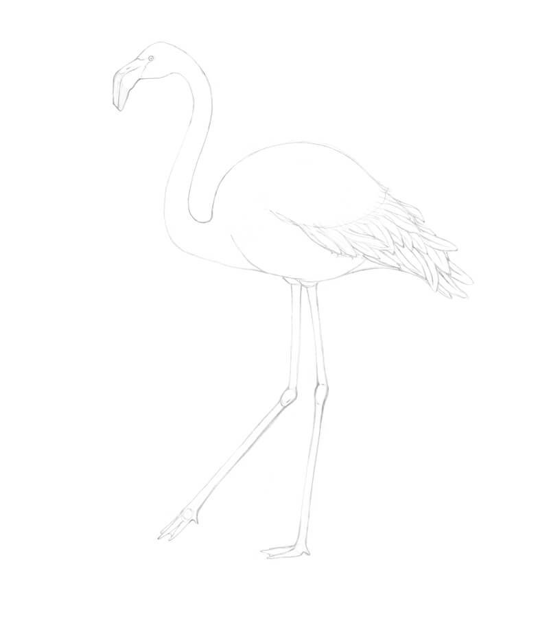 Completed flamingo sketch