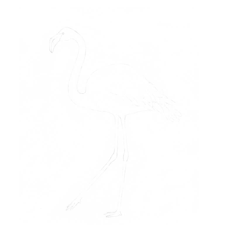 Traced image of a flamingo