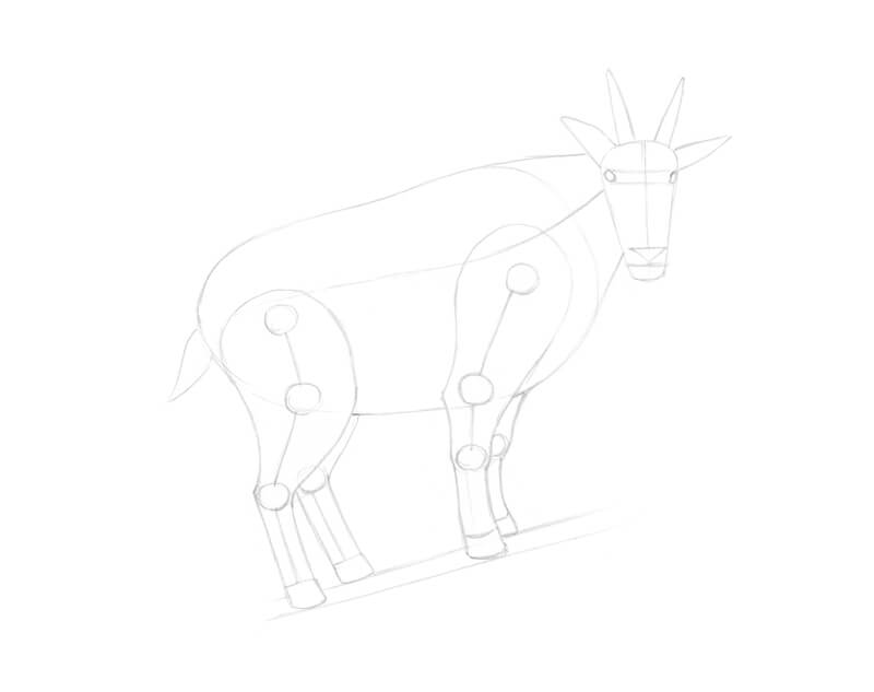 Completing the underdrawing of a goat