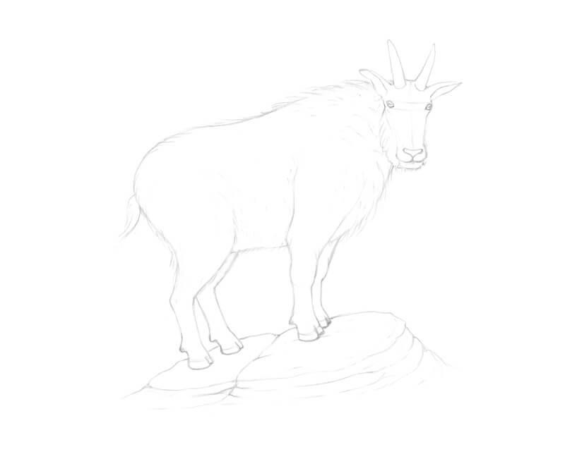 Drawing a few rocks under the goat