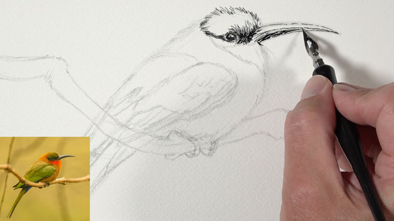 Initial pen and ink applications around the eye and head of the bird