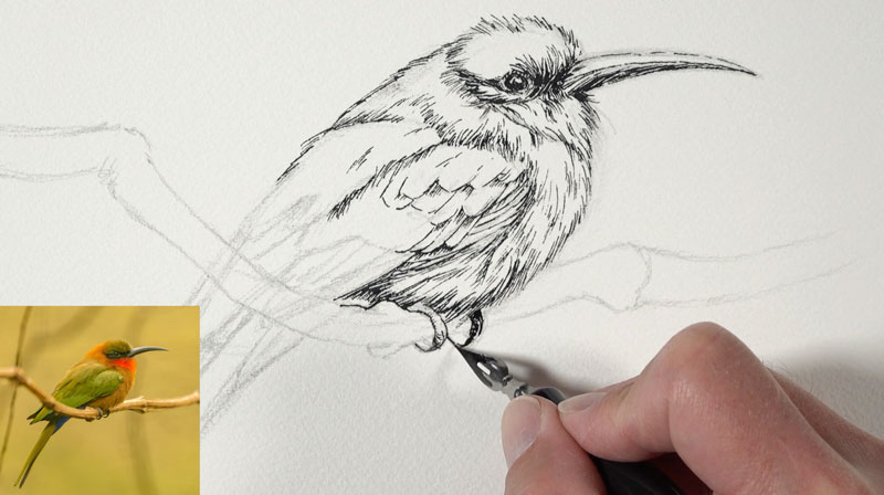 Adding pen and ink applications to the body of the bird
