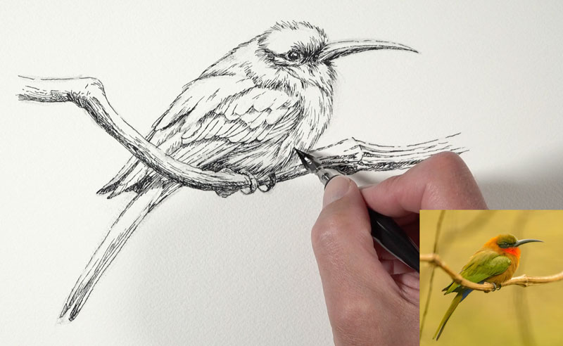 Finishing the pen and ink drawing with a nib pen