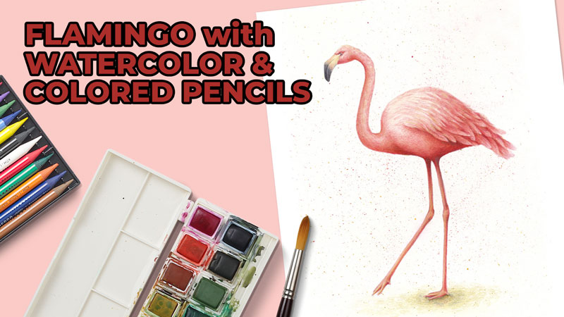 How to Draw a Flamingo with Watercolor and Colored Pencils