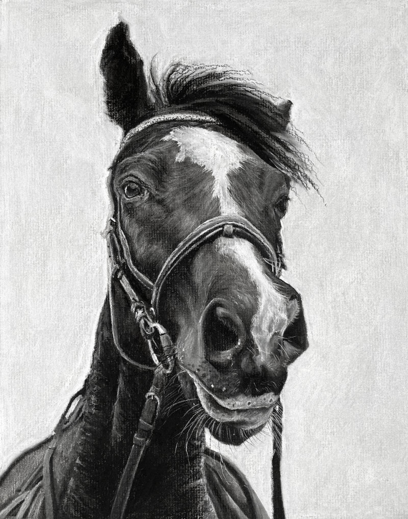 Charcoal Drawing of a Horse