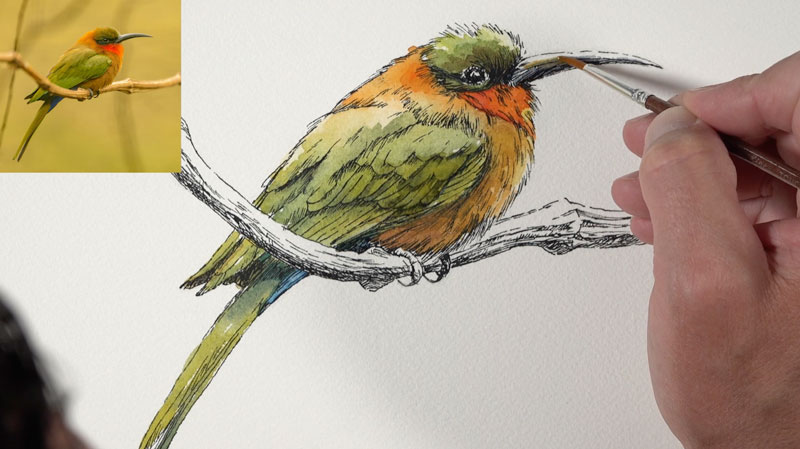 Painting the beak with watercolor