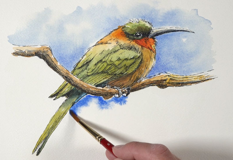 Painting the sky around the bird with watercolor