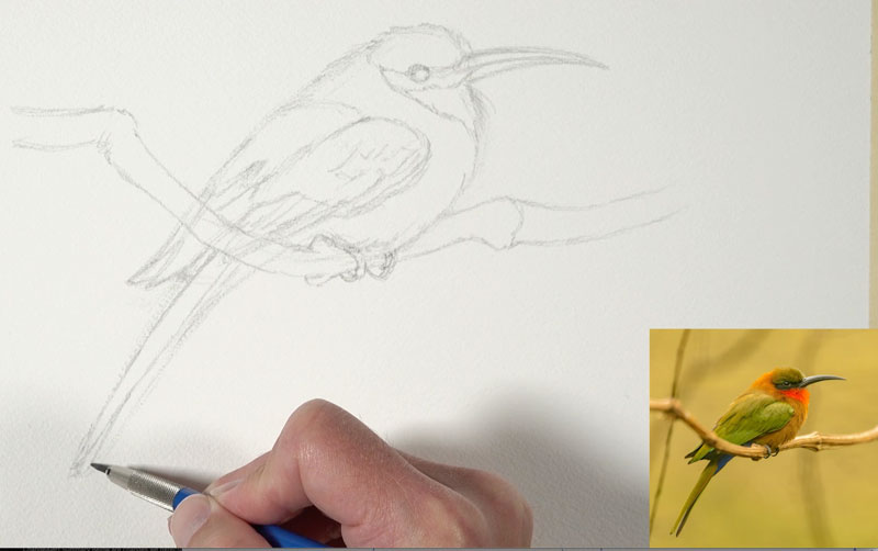 Sketching the bird with graphite pencil