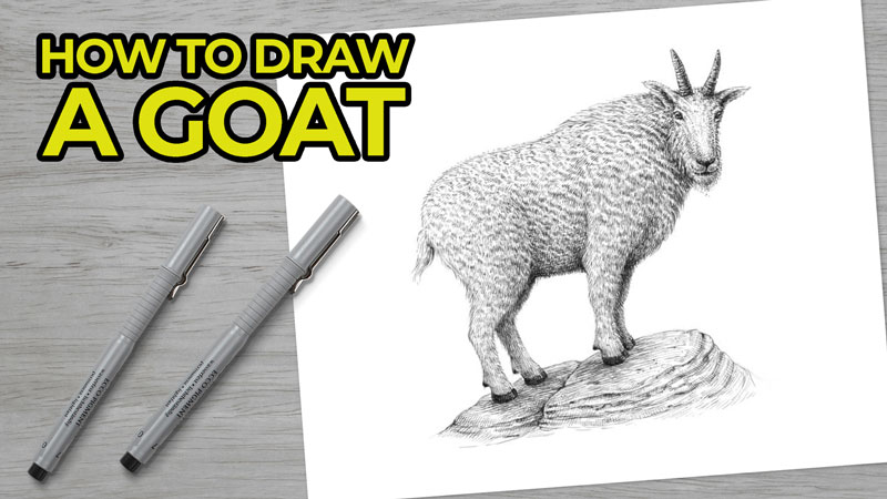 How to Draw a Goat with Pen and Ink