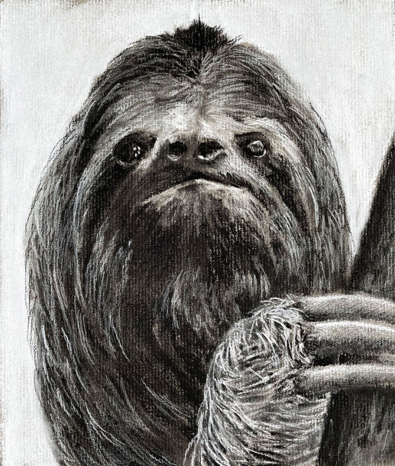 Charcoal Drawing of a Sloth