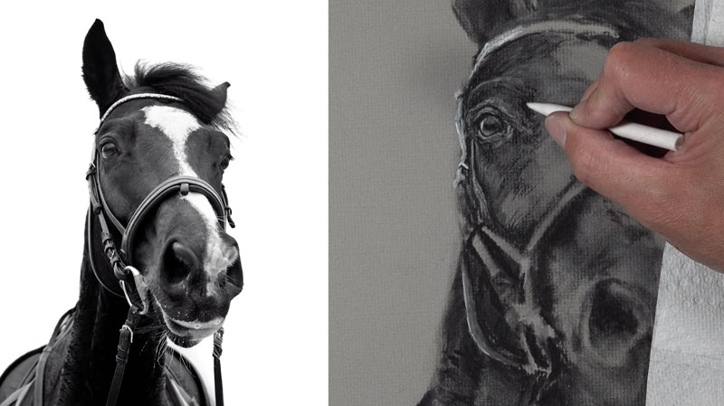 Drawing the eye of the horse with charcoal