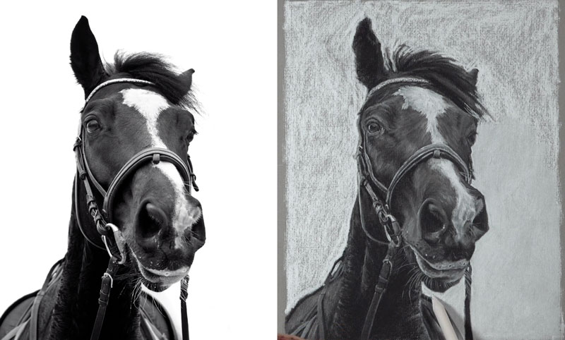 Drawing the background behind the horse with white charcoal