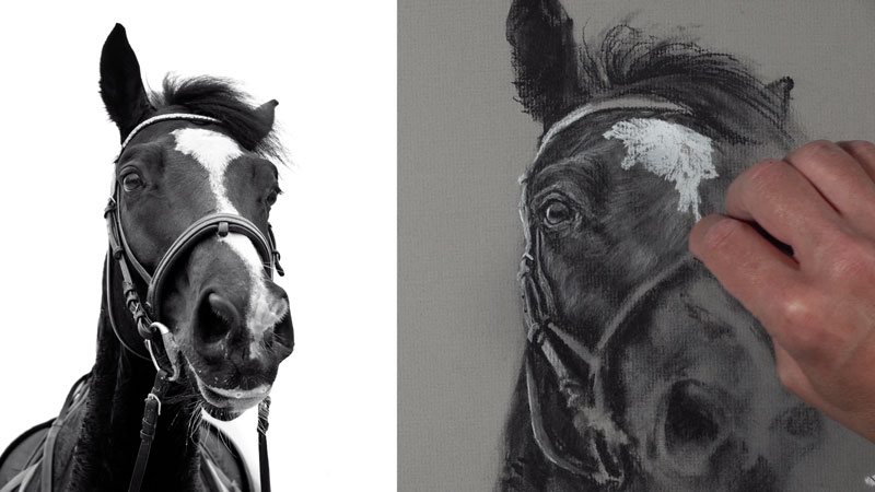 Drawing horse hair with charcoal