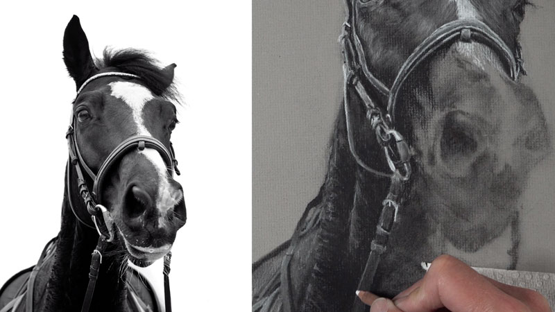 Drawing horse saddle and harness
