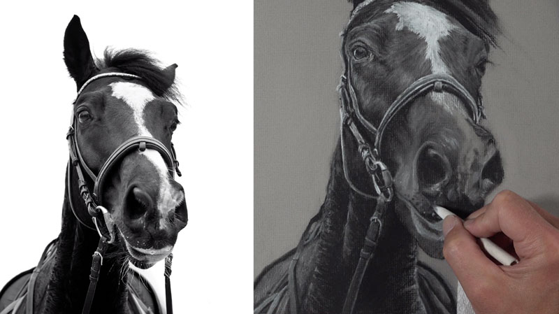 Drawing the snout of the horse