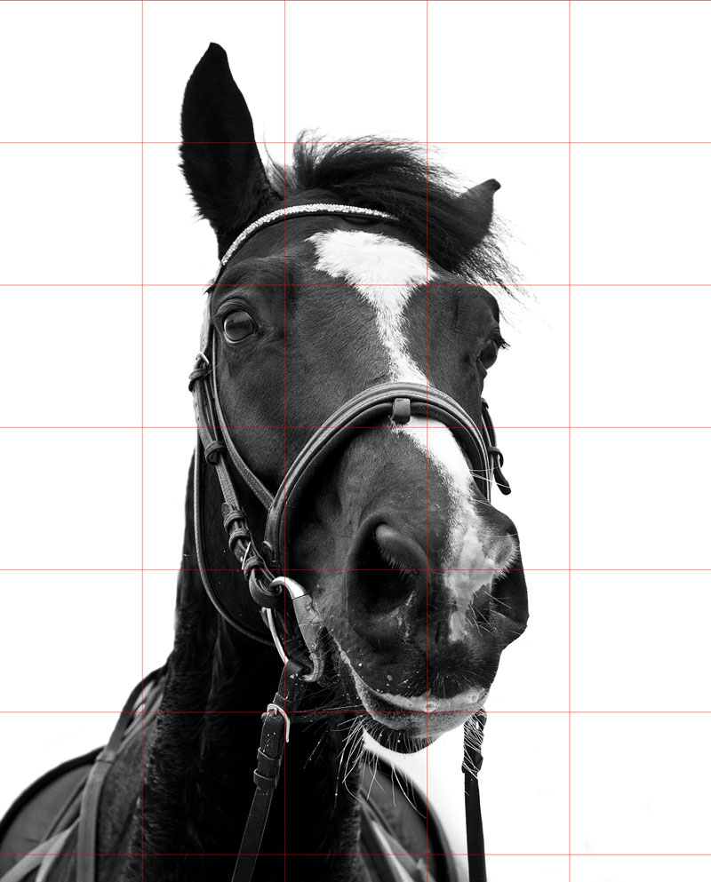 Horse reference photo with grid