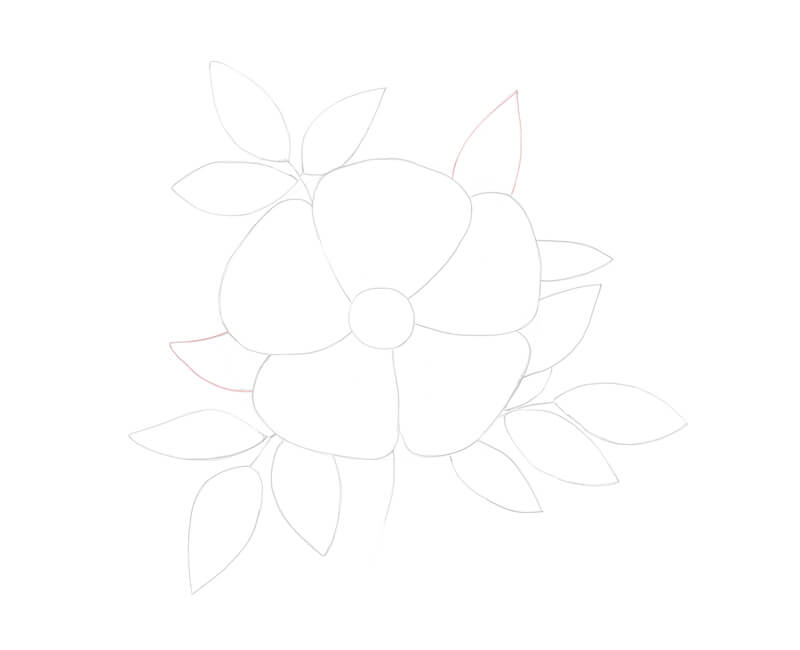 Drawing additional elements on the wild rose