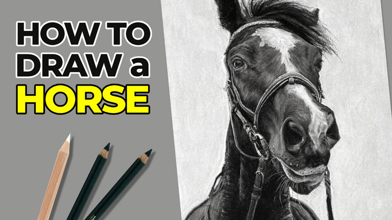 How to Draw a Horse with Charcoal