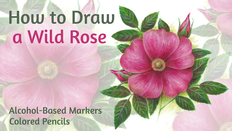 How to Draw a Wild Rose with Markers and Colored Pencils