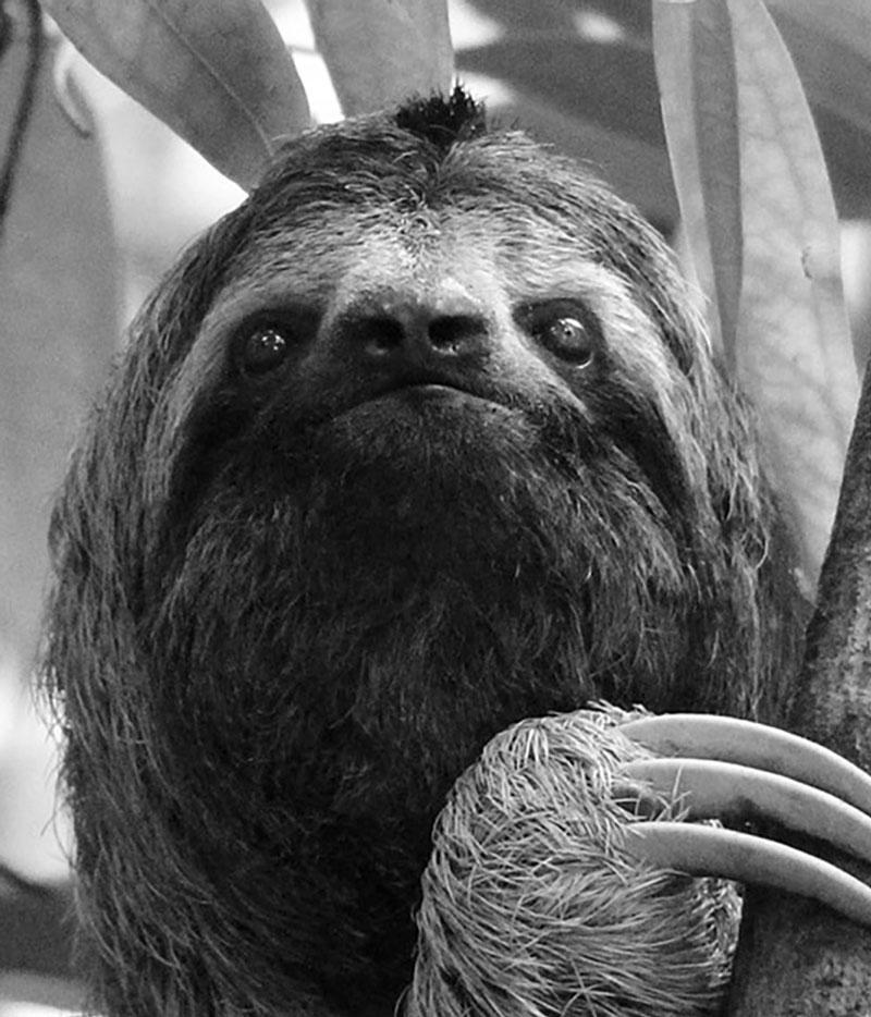 Sloth reference image