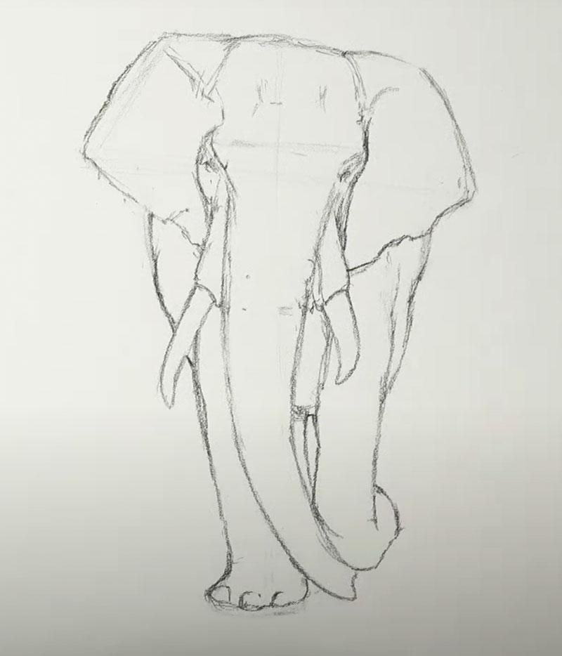 Contour-line-sketch-of-elephant