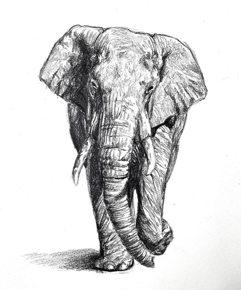Pencil sketch of an elephant