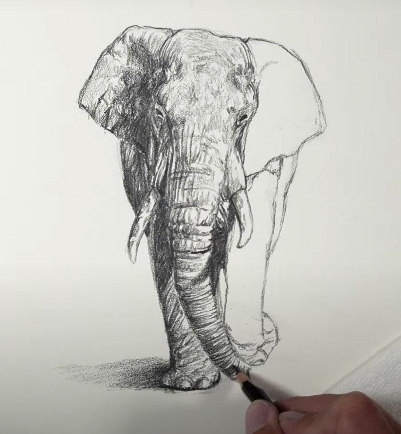 Shading-drawing-elephant