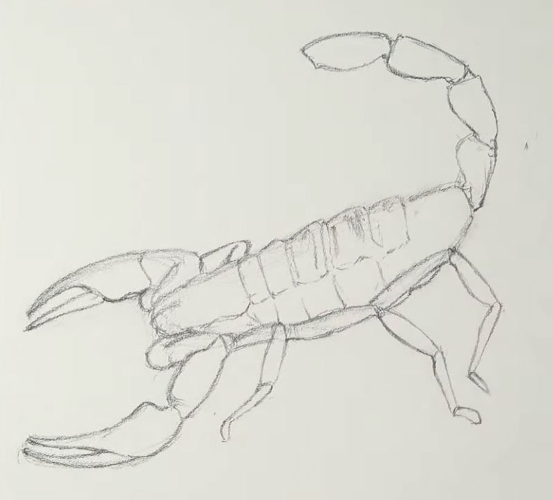 Drawing the outlines of the scorpion