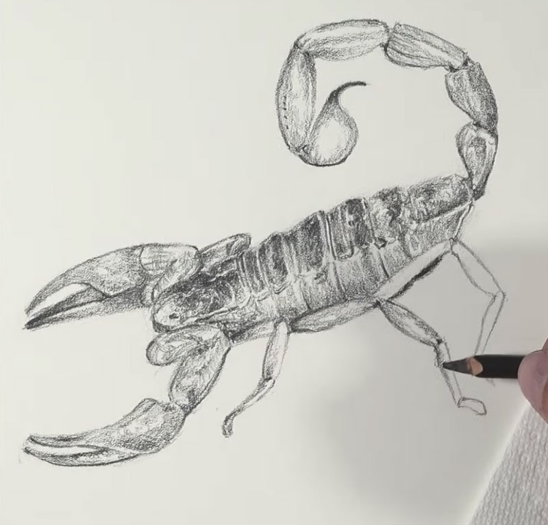Shading the drawing of a scorpion