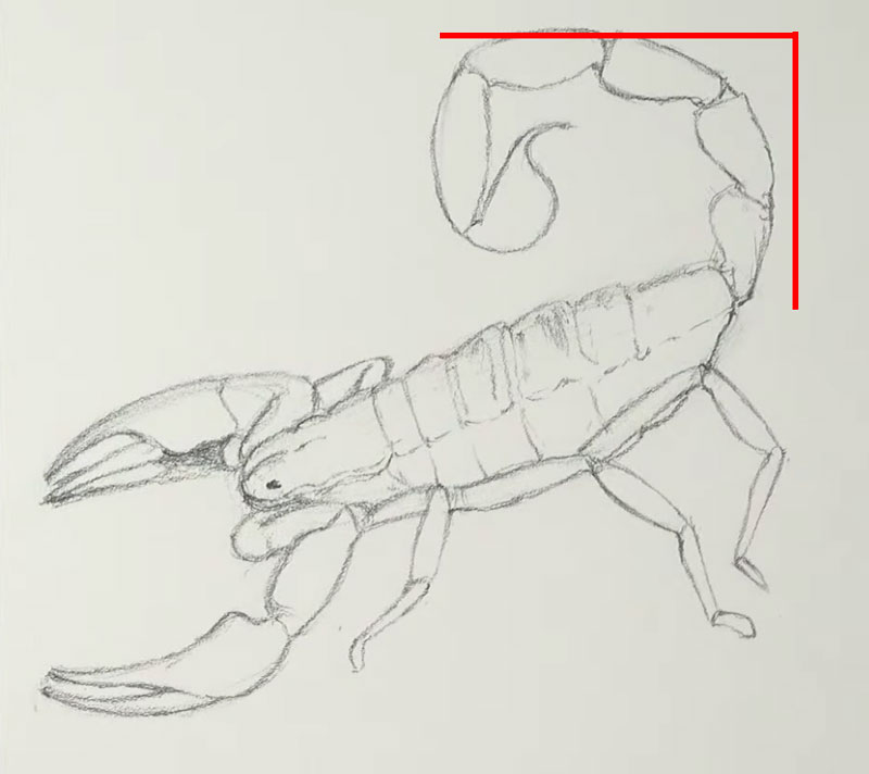 How tall and wide to draw the scorpion tail