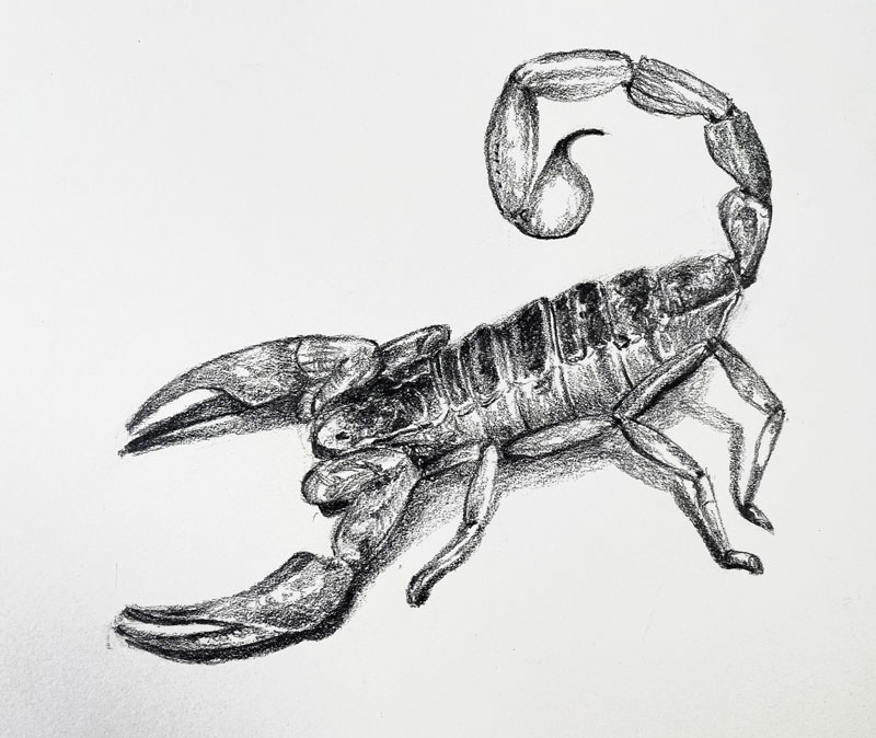 Scorpion drawing with pencil