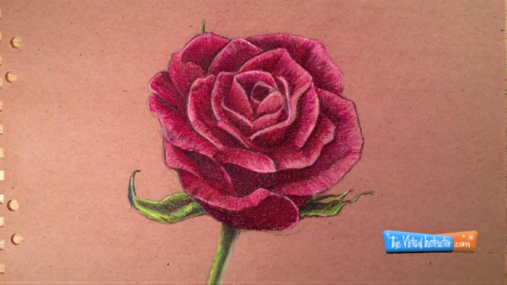 Contour Line Drawing Rose : How to draw a rose with colored pencils video tutorial