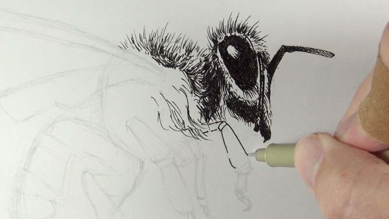 Drawing the eye of a bee pen and ink