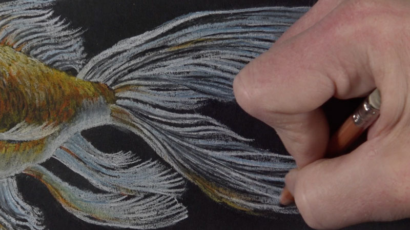 Adding details to the fin of the goldfish