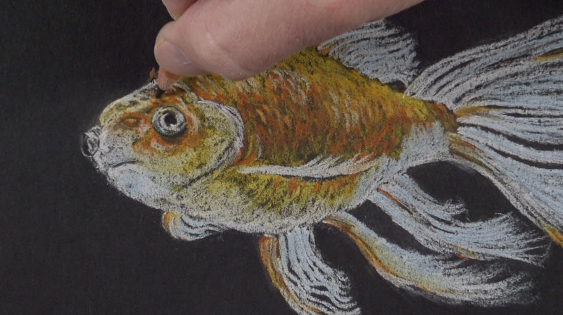 Adding details to the fish with a black pastel pencil