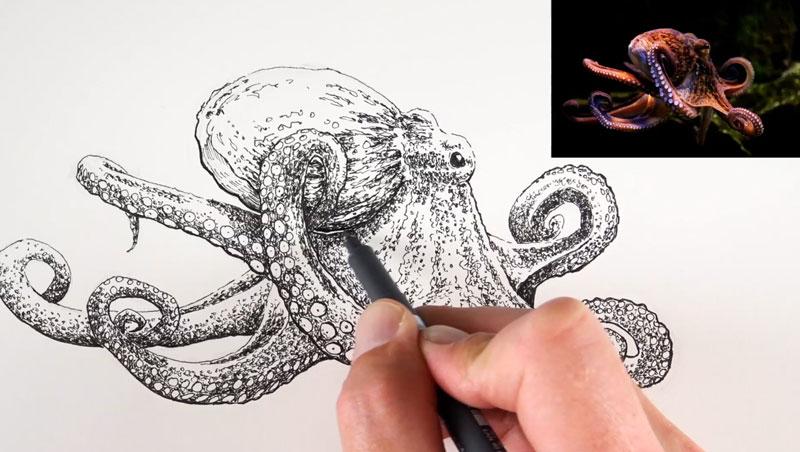 Drawing the head of an octopus