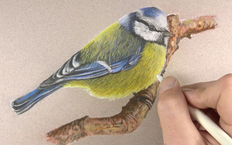 Drawing texture on the branch