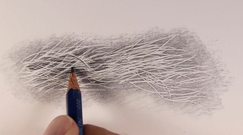Softer graphite is used to devlelop shadows in the fur