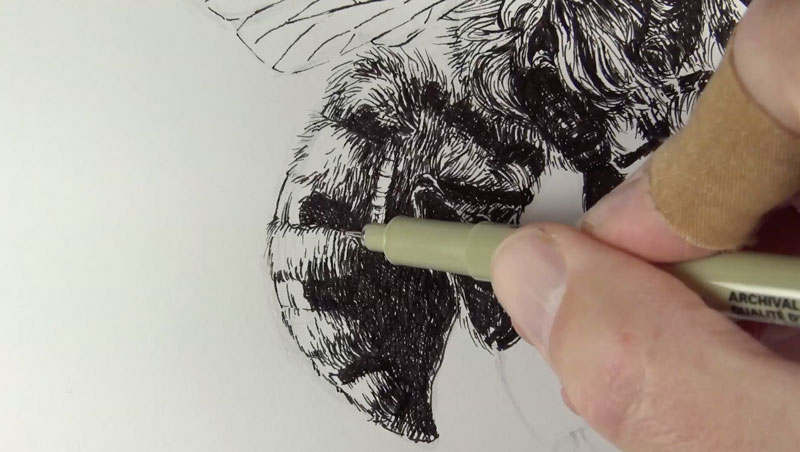 Drawing the pattern on the back of the bee
